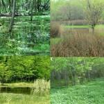 Iº Jornada Ambiental por la Reserva Natural Ciudad Evita