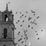 Charla abierta con Marcial Gala, autor de La Catedral de los Negros