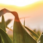 """III Seminario Internacional """"Cambio agrario en América Latina: procesos comparados"""""""