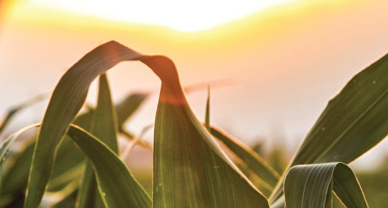 cambio-agrario-web-grande