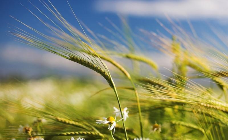 cambio agrario