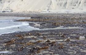 Algas Invasoras Foto: Claudia Muniain