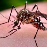 <i>Chikungunya</i>: El virus camaleón