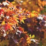 Anotate en los cursos de otoño del Programa de Lenguas