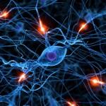 Nuevo centro de estudios en sistemas complejos y neurociencias