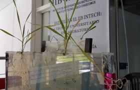 Ingeniería en Agrobiotecnología