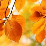 Conocé la oferta completa de los cursos y talleres de otoño