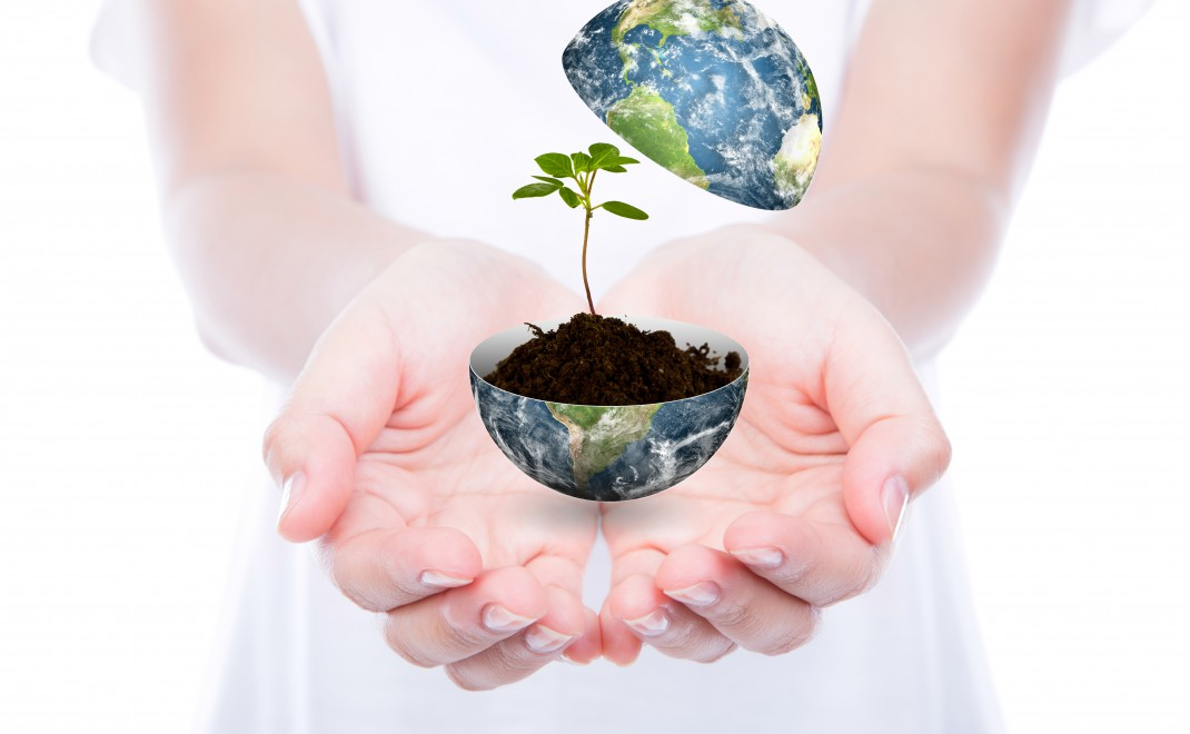 Hand hold young plant in earth isolated on  white background  (E