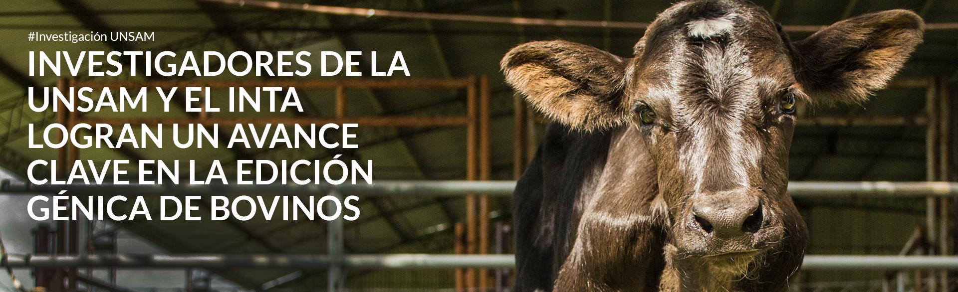Vacas que producen leche hipoalergénica