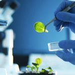 Nueva Maestría en Agrobiotecnología