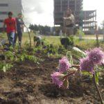 UNSAM verde: Más especies nativas en el Campus