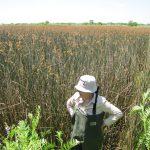 Cuenca Matanza-Riachuelo: Investigadorxs del 3iA dirigen el inventario de humedales