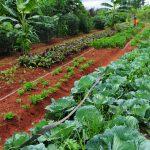 """IDAES en Foco: """"El desafío global es cómo producir alimentos sanos para la población"""""""