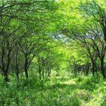 Webinar sobre la situación de la Ley Nacional de Bosques Nativos