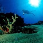 """""""Experiencias en recuperación de la biodiversidad marina en el Mediterráneo"""""""