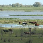 """Conferencia: """"Causas y consecuencias de los cambios en el uso del suelo en humedales: el caso del Delta del Paraná"""""""
