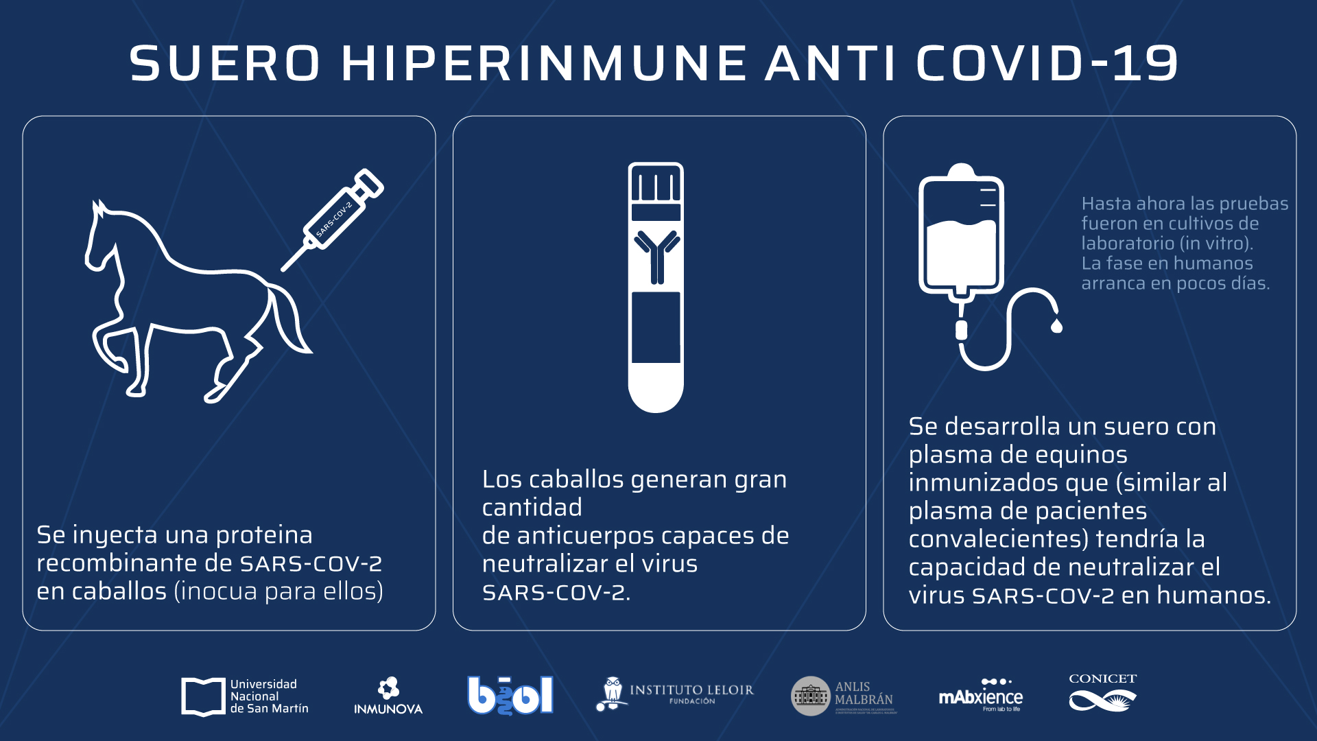 Investigadores de la UNSAM desarrollaron un suero hiperinmune contra COVID- 19 » Noticias UNSAM