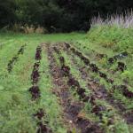 Bioleft: Un laboratorio de investigación y codiseño de semillas para el sector agrícola