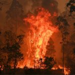 """Webinar """"Incendios y territorios amenazados: ¿políticas ambientales en entredicho?"""""""